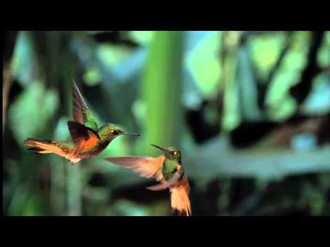David Attenborough's spectacular Conquest of the Skies official trailer