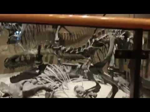 Ceratosaurus and Marshasaurus at the Utah Natural History Museum