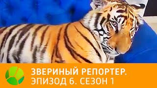 Звериный репортер  Эпизод 6  Сезон 1