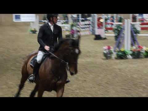 David Coombs- High Offley Checkmate Z - Showjumper