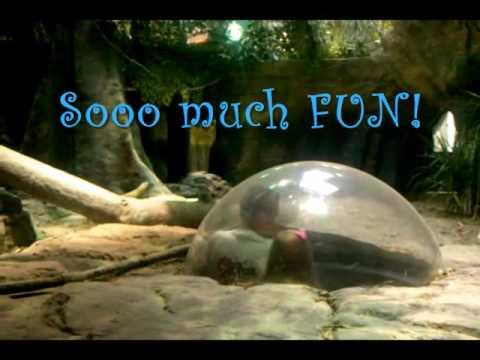 Virginia Beach Aquarium Youtube