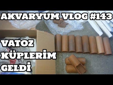 Akvaryum Vlog #143 (Vatoz Küplerim Geldi)