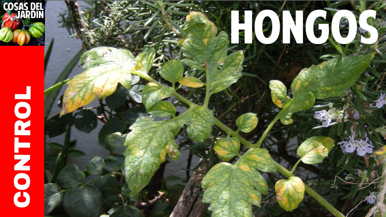 Resultado de imagen para ¿Cómo controlar el ataque de hongos en las plantas en semillero?