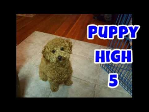 Puppy High 5 ~ Just Gin 3: Cutest Dog Ever! VOL. 44