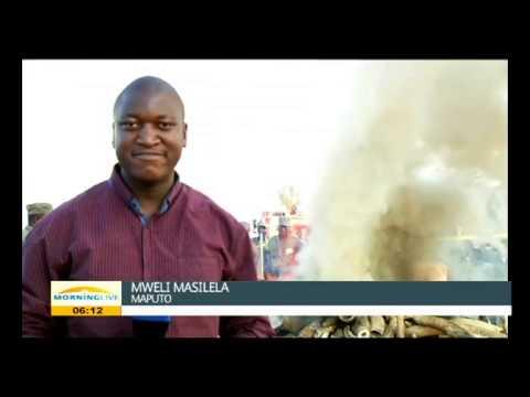Mozambique destroy seized ivory, rhino horn