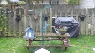 My backyard bird and squirrel cafe and a baby squirrel!