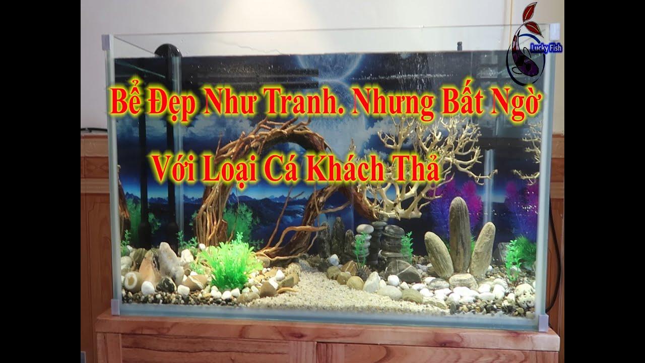 Setup Bể Biotop Cực Đẹp Nhưng Cái Kết Bất Ngờ Khi Gia Chủ Nuôi Cá Chép\Style Biotop\Lucky Fish