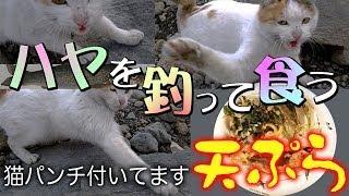 ハヤを釣って食う 猫ハ ンチ炸裂 天ふ ら river fishing with a cat