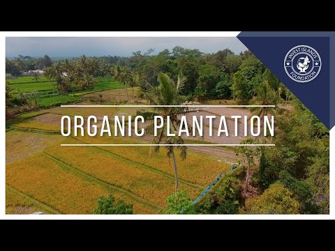 Invest Islands Organic Plantation Field Explained