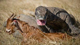 Самые большие хищники нашей планеты!