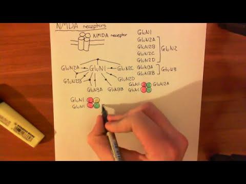 NMDA Receptors Part 1