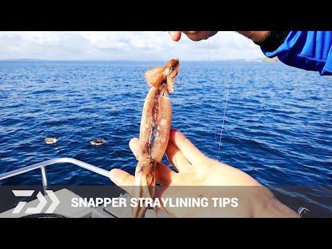 Daiwa: Bait Fishing Tips & Technique For Snapper - Strayline Fishing