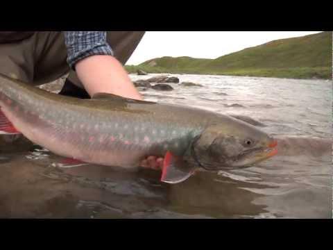 Tree River | Plummer's Arctic Lodges