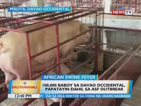 BT: 100,000 baboy sa Davao Occidental papatayin dahil sa ASF outbreak