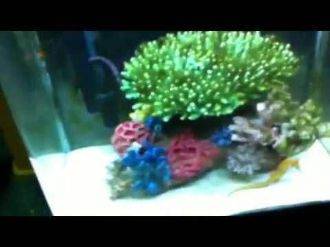 Algae problems in a seahorse tank by Paul Talbot