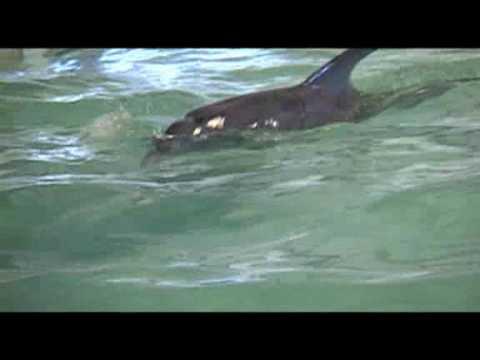 Atlantic Bottlenose Dolphin Found Stranded On Port Aransas