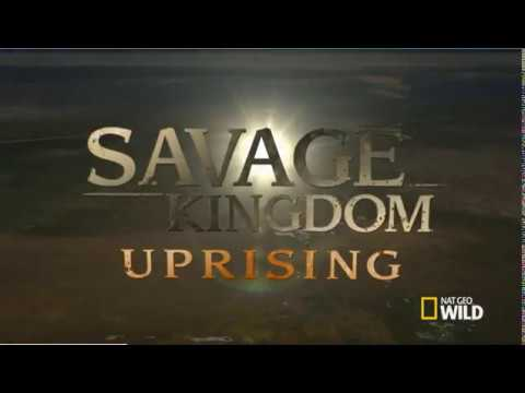 Savage Kingdom Uprising Season 2 Episode 1 CATS WILDLIFE PUBLIC DOMAIN