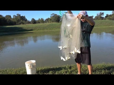 Cast-Netting Food for the Fish!