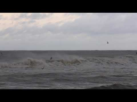 Gulf Shores as Hurricane Michael comes ashore