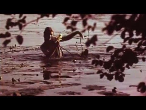Plaukė pylelė (Curonian-Samogitian hunting song | Šiaurės Žemaičių liaudies daina)