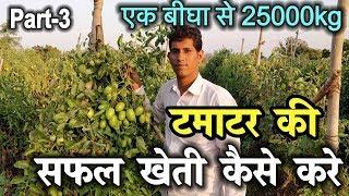 हाईब्रिड टमाटर की खेती | Hybrid Tomato Farming Technique || High Profit Tomato Farming