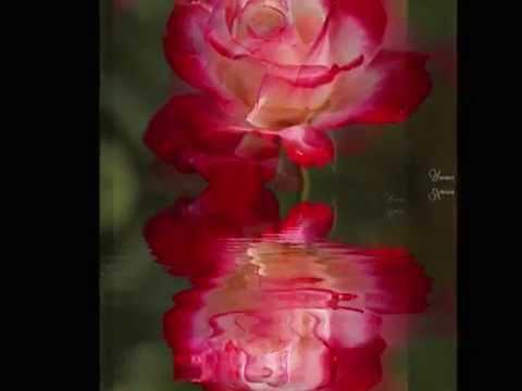 Czerwone Roze Wiersz