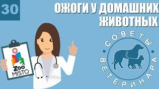 Ожоги у домашних животных | Первая помощь при ожогах у питомцев | Виды ожогов | Советы Ветеринара