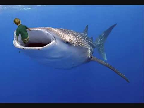 Whale shark swallow a kid alive shocking video youtube for The fish that ate the whale
