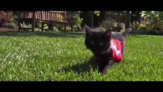 Кошки поют реп