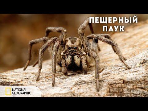 Вопрос: Какая наука изучает паукообразных?
