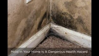Mold Removal Steamboat Springs Colorado