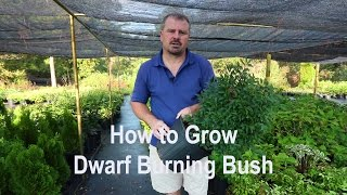 How to grow Dwarf Burning Bush with detailed description