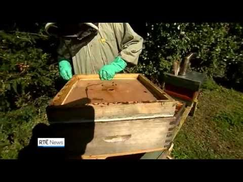 Concern for bees - pesticide linked to a decline in pollinating insects