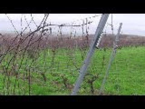 BELGIAN WINES VIDEO