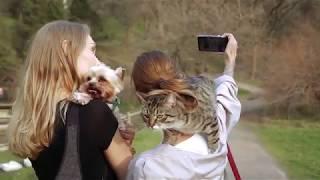 Кошка на шеи у девушки