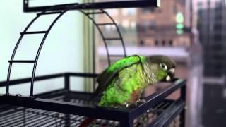 Jontron - The Life Of A Show Bird (Facebook Video)