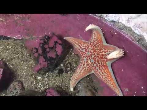 Do Starfish Bite? Daily Vlog 7-9-15