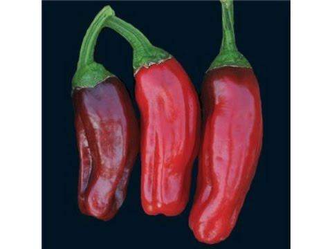 ⟹-italian-pepperoncini-pepper,-capsicum-annuum-plant-review-#pepper