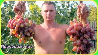 Виноград.  Сорта винограда(Купить тапенер для подвязки винограда http://ali.pub/9xfqs #Сорта винограда и гибридные формы. #Виноград представлен..., 2016-12-13T12:59:41.000Z)