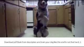 Dog Training - [guide For Dog Trainig At Home] How To Train Your Dog
