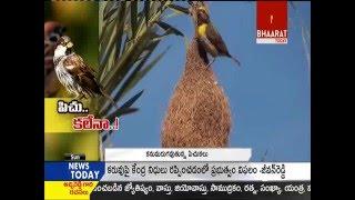 World Sparrow Day || Bhaarat Today