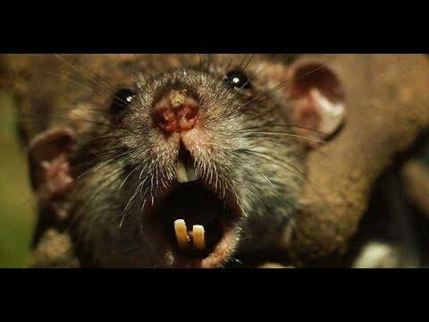Хоррор.Крысинг #14 ферма Night Rat Night Vision (Утка,Ёж и ...