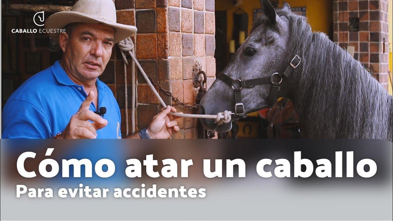 Cómo atar un caballo 🐴  para evitar accidentes ⚡💣