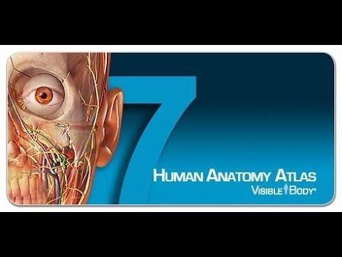 Descargar anatomía humana en 3D GRATIS....ESPAÑOL... - YouTube