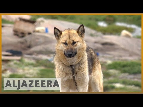 🇬🇱 Climate change threatens Greenland's sled dog culture | Al Jazeera English