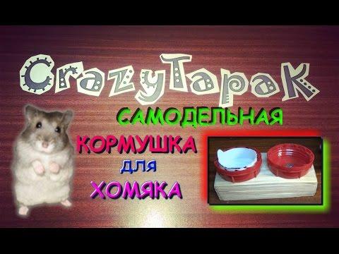 Видео Как сделать кормушку для хомяка своими руками ( CrazyTapaK)