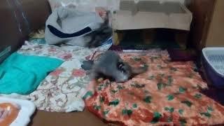 игривые плюшевые котята-2