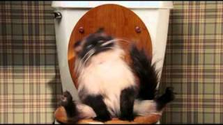 Кот на унитазе испускает жуткие газы)