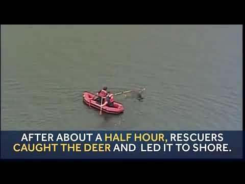 Deer rescued from Pittsburgh's Highland Park Reservoir