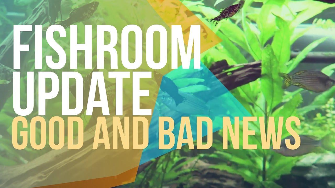 Fish tank antibiotics - Good New And Bad News Fish Room Update Treating Fish Tank With Antibiotics